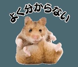 I like hamsters 3 sticker #12789367