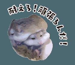 I like hamsters 3 sticker #12789373