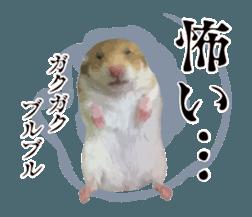 I like hamsters 3 sticker #12789374