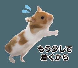 I like hamsters 3 sticker #12789376
