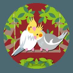 Cockatiel with a cute cheek2