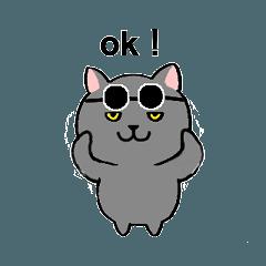 Funny  cat  will  greet