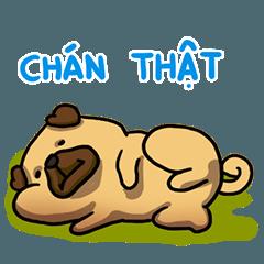 Pugi Pug