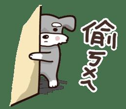 A cute Miniature Schnauzer (Little Fat) sticker #13130343