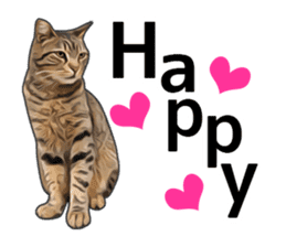 Various brown tabby cats. (ENGLISH) sticker #13131377