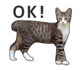 Various brown tabby cats. (ENGLISH) sticker #13131383