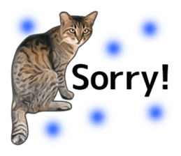 Various brown tabby cats. (ENGLISH) sticker #13131392