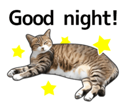 Various brown tabby cats. (ENGLISH) sticker #13131403