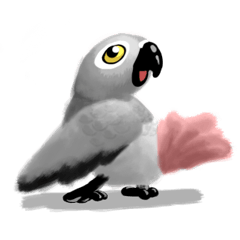 SoftParrots (African Greys)