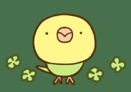 Budgies Fickle 8 sticker #13252456