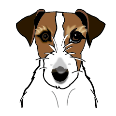 Day to day Jack Russell Terrier