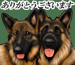 Mr. shepherd 3 Police dog Real style. sticker #13346821