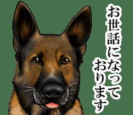 Mr. shepherd 3 Police dog Real style. sticker #13346827