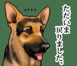 Mr. shepherd 3 Police dog Real style. sticker #13346829