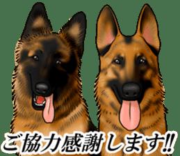 Mr. shepherd 3 Police dog Real style. sticker #13346840