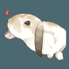 Taremimi rabbit mix!