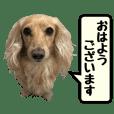 【実写16セット】ダックスフンド - クリエイターズスタンプ