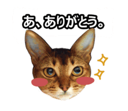 CAT-Abyssinian3 photo Ver sticker #13403943