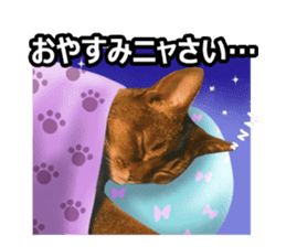 CAT-Abyssinian3 photo Ver sticker #13403947