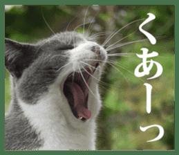 Arakezuri cat photo sticker sticker #13429750