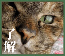 Arakezuri cat photo sticker sticker #13429752