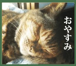 Arakezuri cat photo sticker sticker #13429753