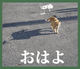 Arakezuri cat photo sticker sticker #13429754