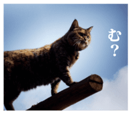 Arakezuri cat photo sticker sticker #13429755