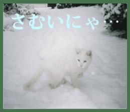 Arakezuri cat photo sticker sticker #13429756