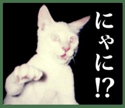 Arakezuri cat photo sticker sticker #13429757