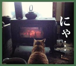 Arakezuri cat photo sticker sticker #13429758