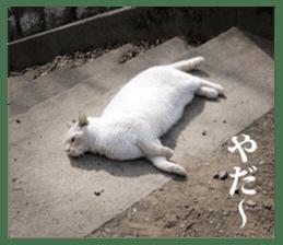 Arakezuri cat photo sticker sticker #13429762