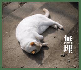 Arakezuri cat photo sticker sticker #13429764
