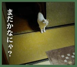 Arakezuri cat photo sticker sticker #13429765