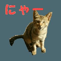 cat!cat!cat?