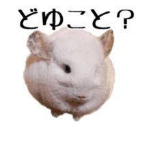 white chinchilla sticker #13463655