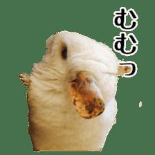 white chinchilla sticker #13463656