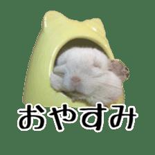 white chinchilla sticker #13463660