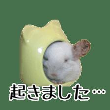 white chinchilla sticker #13463661