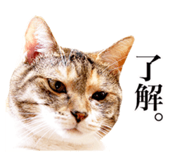 Photograph of cats sticker #13485936