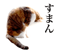Photograph of cats sticker #13485942
