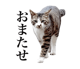 Photograph of cats sticker #13485949