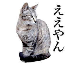 Photograph of cats sticker #13485952