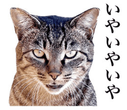 Photograph of cats sticker #13485961