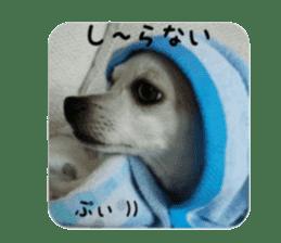 nari sticker sticker #13488061