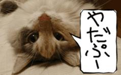 Instead tell the cat sticker #13489942