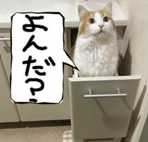 Instead tell the cat sticker #13489943