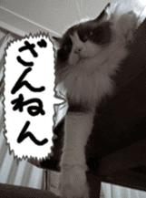 Instead tell the cat sticker #13489945