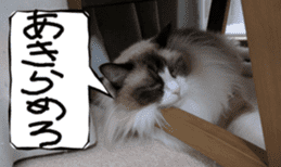 Instead tell the cat sticker #13489949