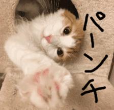 Instead tell the cat sticker #13489950